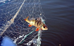 На одном из водоёмов Шарковщинского района были задержаны двое нарушителей, которые в ночное время ловили рыбу с использованием сетей