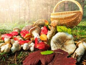 Грибникам на заметку: профилактика отравлений грибами