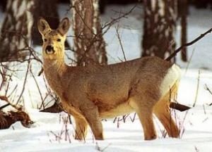 РОСК информирует: уголовная ответственность за транспортировку диких животных