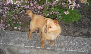 Пропала собака! Нашедшего  или что-то знающего о ее местонахождении ждет вознаграждение