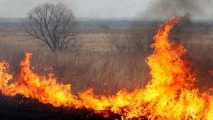 Ежегодно с наступлением весны палы сухой травы превращаются в рукотворное стихийное бедствие