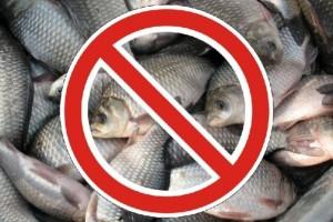 О весеннем запрете на лов рыбы по Витебской области