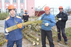 Удаление и пересадка объектов растительного мира